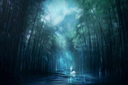 moonlight: Swan Lake Stock Photo