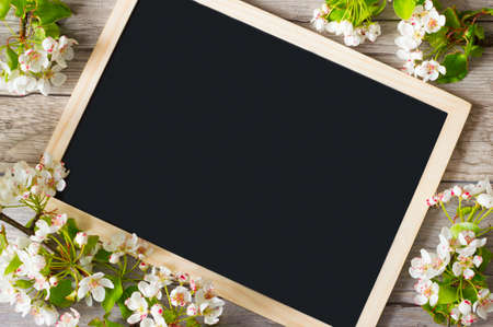 Frame of flowering pear branches with space for text on a blackboard. Delicate flowering and the heady scent of spring Archivio Fotografico