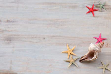 Seashells and starfish on a light gray shabby background. Time of sea and vacation. Archivio Fotografico