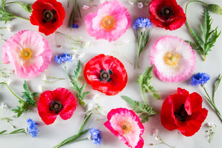 Flowers background. Red and pink poppy and blue cornflower on light green background.
