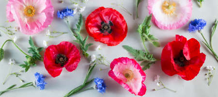 Red and pink poppy and blue cornflower on a light green background. Flowers background Archivio Fotografico
