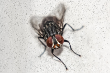Portrait art of common house fly. You can see the details with a touch of paint oil