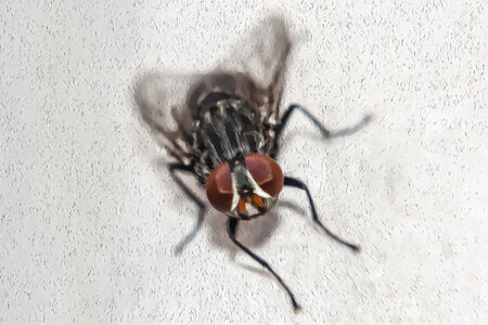 details: Portrait art of common house fly. You can see the details with a touch of paint oil