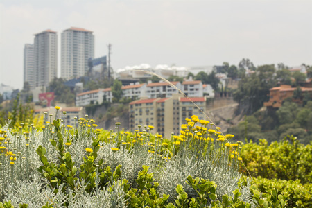 Detail of flowers and plants together with buildings in the background Stock Photo