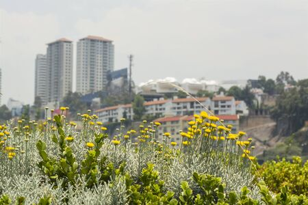 residencial: Detail of flowers and plants together with buildings in the background Stock Photo