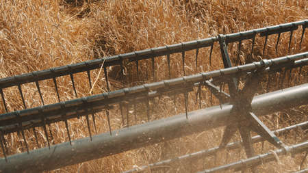 Closeup of cutter bar of a combine harvester in a golden wheat field ready to cut the ripe wheat crops. Concept of the season of gathering crops for transportation and selling.