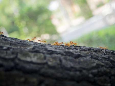 Ants on bark of the tree. Reklamní fotografie