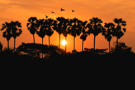 Silhouette of palm tree and sunrise background.