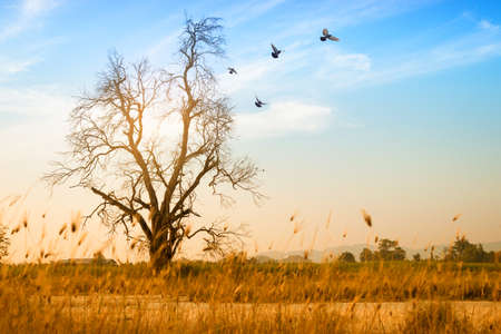 Dead big tree and copy space for background concept.Pigeon flying in the beautiful sky. Reklamní fotografie