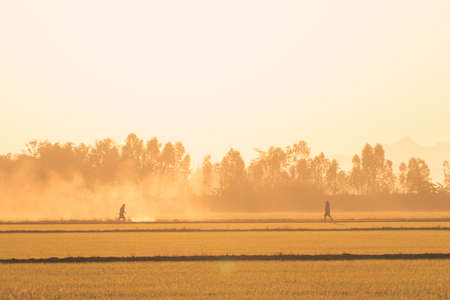 Farmers are Insecticide disposal in the morning with fog and light of the sun.