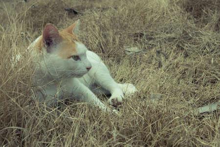 Cat relax on dry grass. Reklamní fotografie