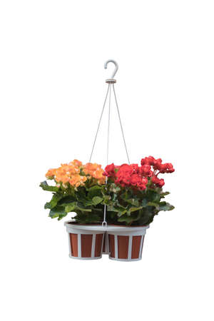 Flowers in a hanging pot isolated on white background with clipping path. Reklamní fotografie