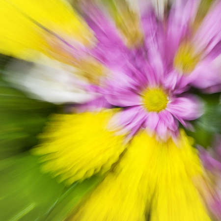 Different flowers are photographed in the technique of zooming Stock Photo