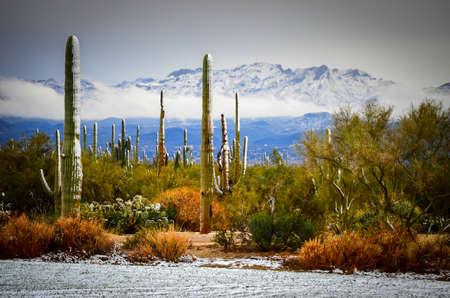 ツーソン、アリゾナ州の外の砂漠の降雪