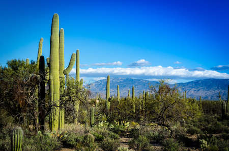Wide view of the Tucson countryside