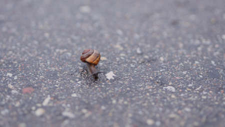 The little snail creeps on the asphalt