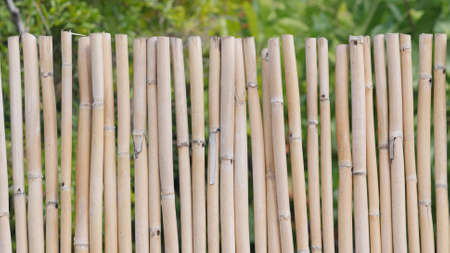 Background of a bamboo fence Stock Photo