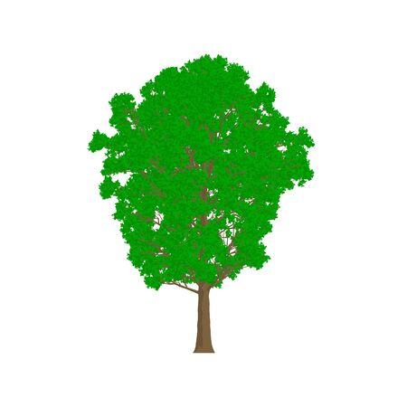 poplar: Poplar tree cartoon shaded isolated in white background Stock Photo