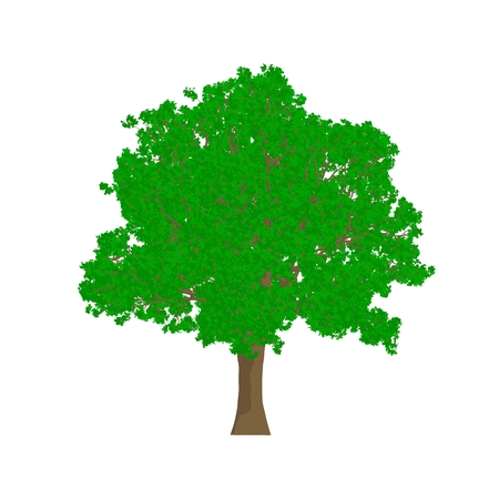 quercus: oak tree cartoon shaded isolated in white background Stock Photo
