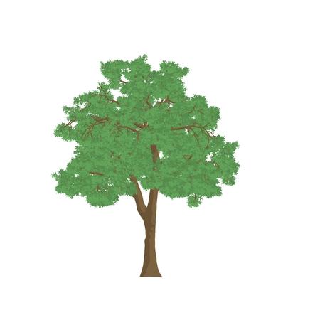 ash tree: ash tree cartoon shaded isolated in white background Stock Photo