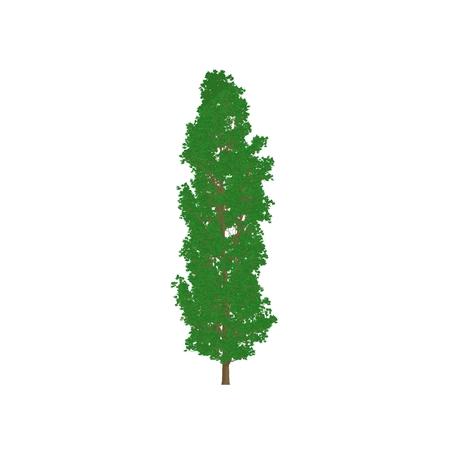 poplar tree cartoon shaded isolated in white background photo