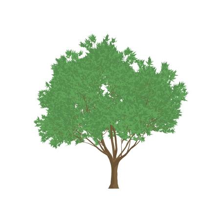 ironwood: black ironwood tree cartoon shaded isolated in white background