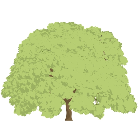 japanese maple: Japanese maple tree cartoon shaded isolated in white background Stock Photo