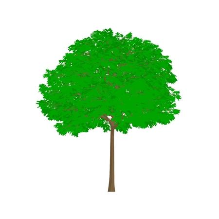 ash tree: mountain ash tree cartoon shaded isolated in white background Stock Photo