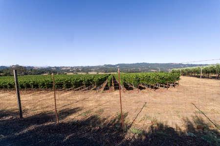 Sonoma County Vineyard