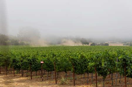 Early foogy morning at a Santa Rosa winery. 版權商用圖片