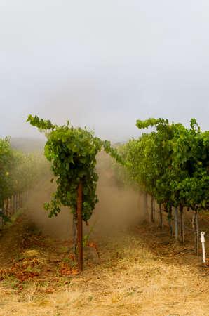 Early foogy morning at a Santa Rosa winery. Stock Photo