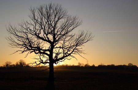 Lone tree Imagens