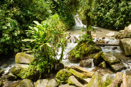 water's: River in the jungle