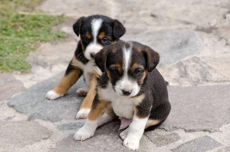 twee: Puppies