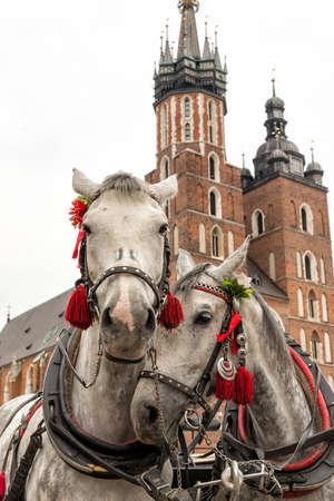 krakow: Horses in Krakow