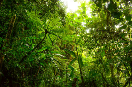 tropical  forest: Jungle