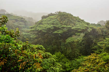 Vue de jungle Banque d'images - 37247952