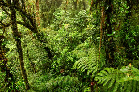 Suriname: Jungle