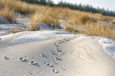 herbage: Dunes at the beach