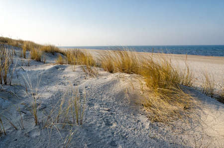 seaboard: Dunes at the beach