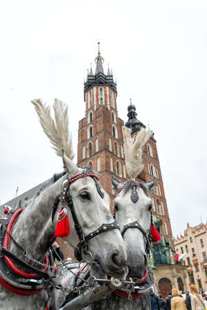 krakow: horses in Krakow Stock Photo