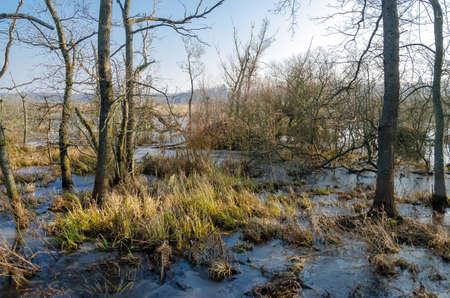 swampland Reklamní fotografie