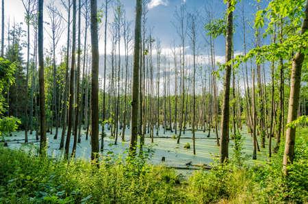 quagmire: swampland Stock Photo