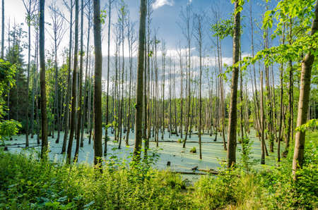 swampland: swampland Stock Photo
