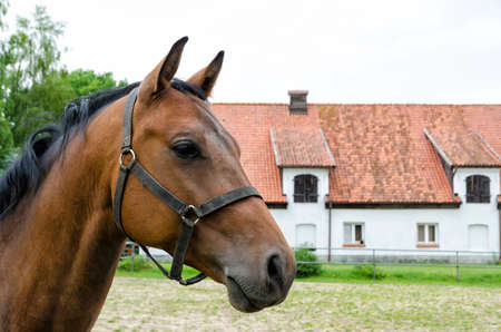 chastity: horse