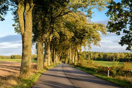 doldrums: Avenue in Masuria