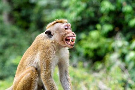 violación: capó mono