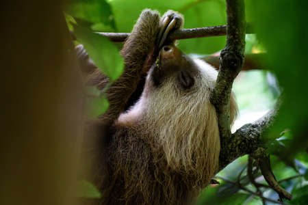 sloth: sloth in a tree in the jungle