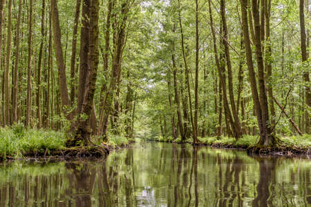 landscape with rivers and forest in the Spreewald in Brandenburg in Germany Stock Photo