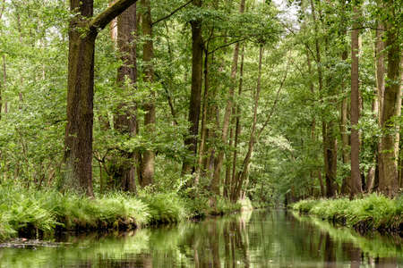 landscape with rivers and forest in the Spreewald in Brandenburg in Germany Banco de Imagens